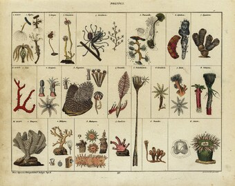 Antique Hand Colored Original  Sealife - Coral Print - 1843