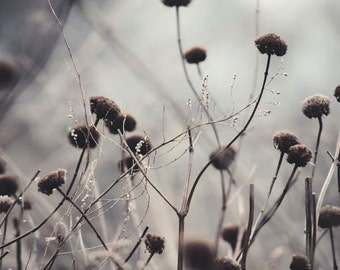 Weeds Photograph - Winter Weeds - Nature Art - Grey Tones - Misty Field - Dancing Weeds - Landscape - Morning Dew - Nature Photography