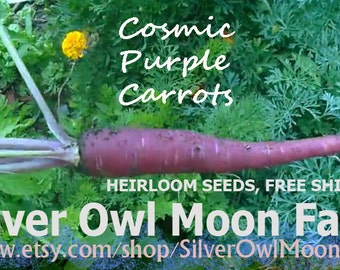 Cosmic Purple Carrot seeds, OP/Heirloom Gourmet Carrots