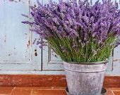 50 -  Vera Lavender Seeds - Heirloom Lavender Seeds, Non-GMO Lavender Seeds, Heirloom Herb Seeds, Non-Gmo Seeds, Medicinal Herb Seeds