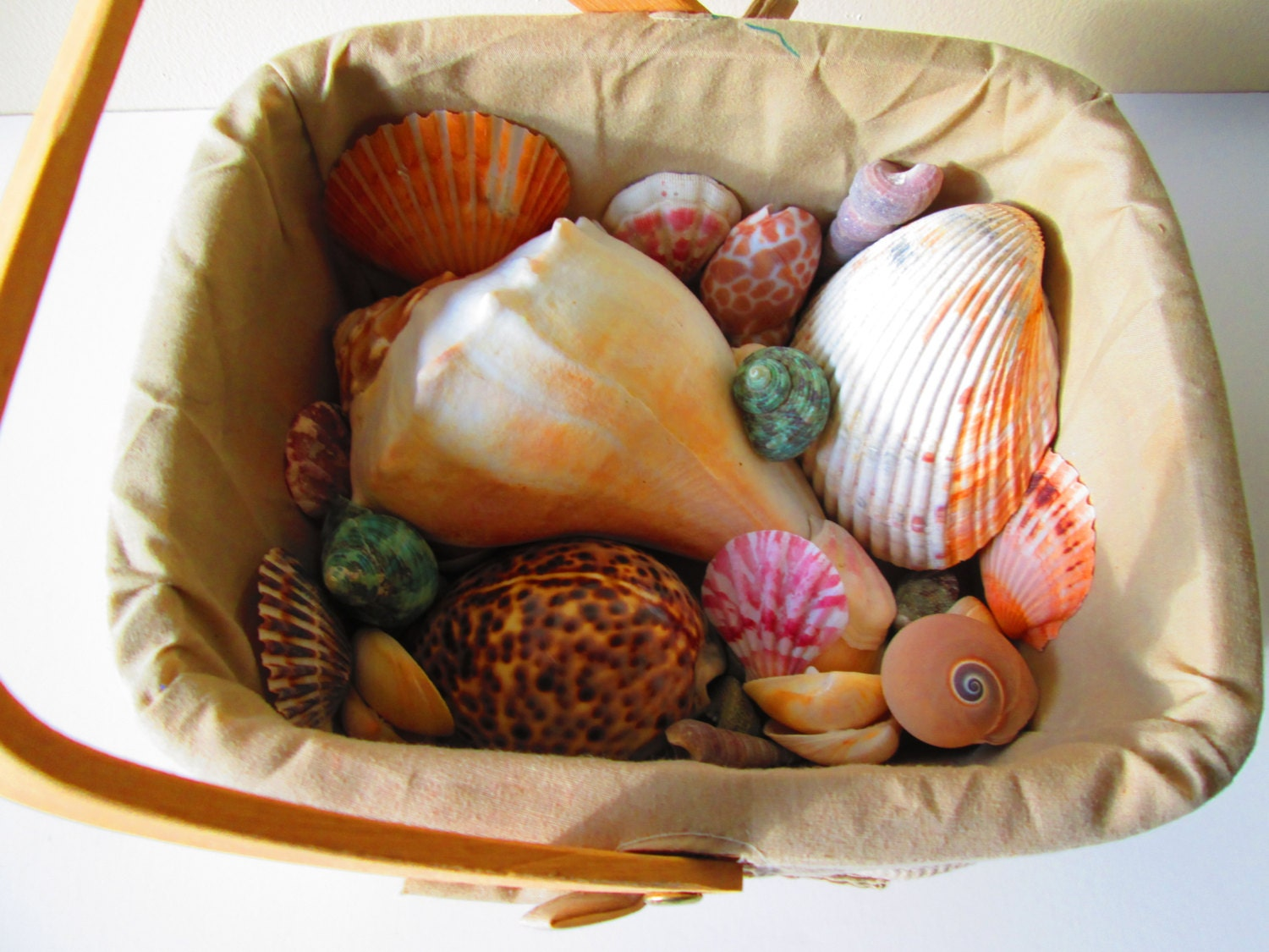 Basket of sea shells home decor craft supplies display for Shells decorations home