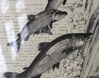 Book page illustration from Smithsonian Scientific Series, volume 8, 1943, Fig. 45. Pacific salmon jumping falls