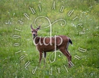 8x10 Deer Photograph
