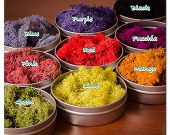 Reindeer Moss, Deer Foot Moss, Lichen, Love is Love, Preserved Moss, Colorful Moss, rainbow colored moss, Moss