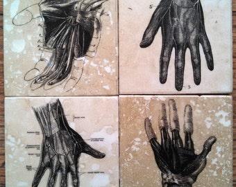 Hands Tile Coasters - Set of 4 // Anatomy // Medical Art // conversation piece // dark decor // weird // creepy // home decor