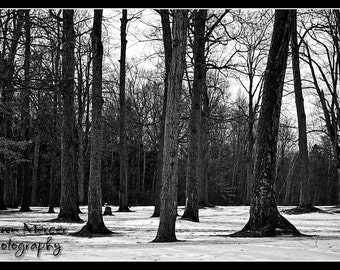 Black And White Photography, Nature Tree Photography Print, Winter Trees Fine Art Photo Print, Fine Art Photography, Wall Decor Art