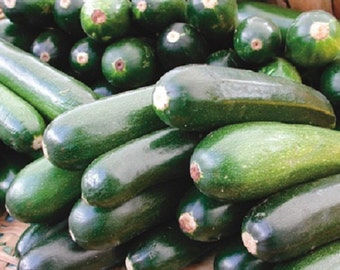 50 *HEIRLOOM* Black Beauty Zucchini (Summer) Squash Seeds