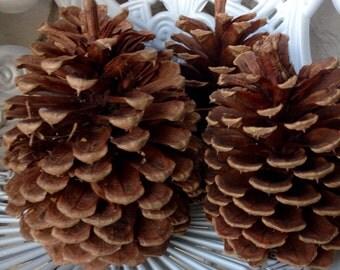 Huge pine cones