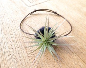Nature Plant Jewelry Air Plant in Hand Felted Terrarium Jewelry Bracelet
