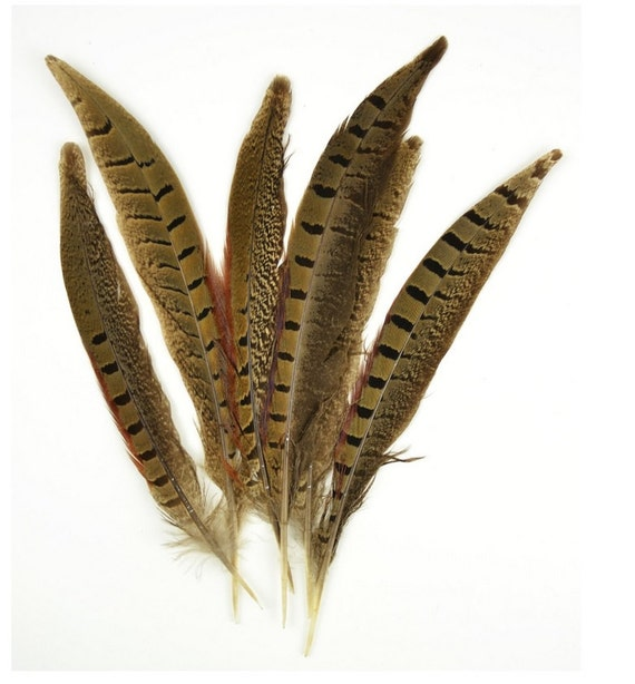 Natural ringneck pheasant feathers 6 count pheasant bird for Natural feathers for crafts