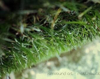 Gravity Still Makes Us Fall - 6x9, Fine Art Print, Macro Photography