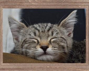 Sleeping grey tabby kitten photo, pet photography, animal photography, kitten print, silver tabby print, tabby cat photo, sleeping cat print