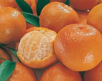 Sweet Mandarin Orange Citrus Fruit Tree Seeds ( Citrus reticulata ) 20+ seeds