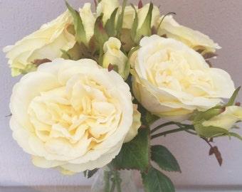 Cream/Lemon Yellow Artificial Cabbage Roses