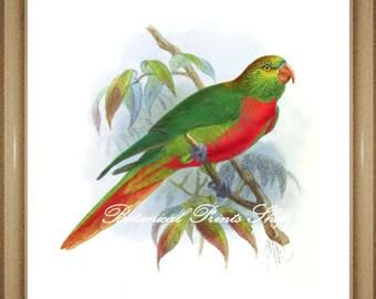 "Bird Print. Parrot Print. Bird picture. Lorikeet. 5x7"", 8x10"" 11x14"""