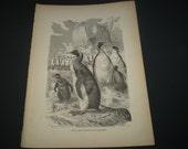 1884 Standard Natural History Mammals. Aptenodytes longirostris. king penguin - Vintage Book Print