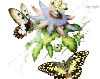 Vintage butterflies and flowers - Temporary tattoo