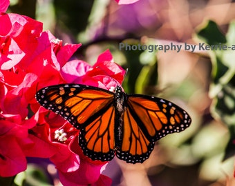 Animal Photography, Digital download photography Butterfly