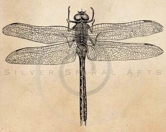 Vintage American Dragonfly Illustration Printable 1800 Antique Dragonflies Print Instant Download Image Clip Art Retro Black & White Drawing
