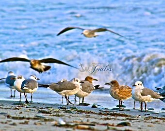 By the Shore ~ Beach, Gorgeous Newport, RI Photograph, Nautical, Rhode Island, New England, Coastal Decor, Seagulls, Nautical Photos, Beach