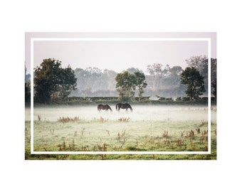 Photo print - Horses in Normandy