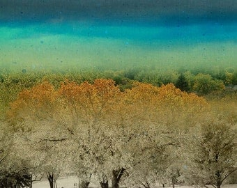 Trees in all four seasons, Fine Art Print