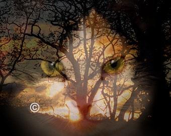 Cat Photo,Photograph of Cat,Photo of Cat Decor,Cheshire Cat Print,Picture of Cat Print,Cat Decor Print,Cat Art Decor,Cat Print Photography