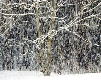 Winter Photograph of a Tree in a Snow Storm, Snow, Winter Photography, Winter Art, Winter Photography, Blizzard, Falling Snow, Snow Art