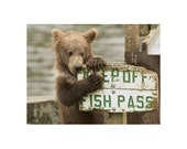 Baby Bear Cub Photo Wildlife Photography Art Print  ~ Bearly a Scratch ~ Rustic Nature Woodland Cabin Bear Decor
