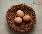 Nest photo with eggs, egg photo, nature decor, rustic photo, rustic decor, nest art, kitchen decor, Romantic Photo, Romantic Decor