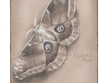 Polyphemus Moth, Greeting Card by Renae Taylor