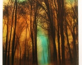 Late autumn moon, winter on the way, 16x20 inches, wood mounted mixed media photograph, original art, trees, nature decor
