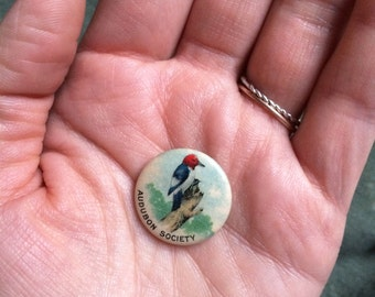 vintage c. 1910s Audubon Society celluloid pinback - Red-headed Woodpecker