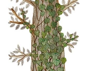 English Ivy Print, nature art, ivy vines, woodland watercolor print, giclee print, watercolour