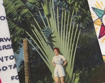 Vintage Florida postcard 1940s linen bathing beauty and travelers palm mid century souvenir kitsch