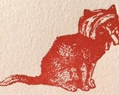 Bewildered, Bandaged Cat - Funny, Offensive Letterpress Card - MATURE Language - F*** and S***, What Next?