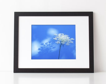 Floral Photography, Queen Ann's Lace with silhouette and blue background, nature photography, choice of print sizes and finish