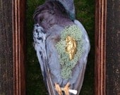 Heart of Gold - Real Dry Preserved Feral Pigeon Display with Real Gilded Rooster Heart, Moss & Bone