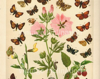 """LARGE 1906 11"""" BUTTERFLIES and Flowers print 15 butterfly chromolithograph antique wall chart print"""
