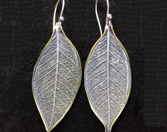 Leaf Earrings. Silver Leaf Skeleton covered with Resin. Sterling Silver French Hooks.