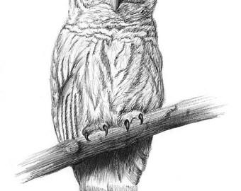 Barred Owl Print - Gift - Art - New Year