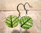 Step Moss (Hylocomium splendens) Circle Glass Earrings, woodland jewellery, nature jewelry, plant, leaf, bryophyte, surgical steel