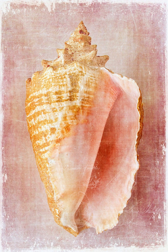Pink Conch, Photography, Seashell Photography, Beach Photography, Nature Photography