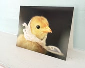 Cute Card Chicks In Hats Miniature Kerchief Chicken Stationary Baby Animal Photography
