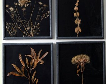 Herbarium Specimen REAL Botanical, Nature, Natural Art, Restoration Hardware