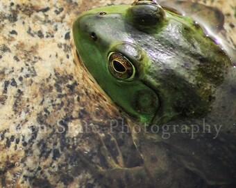 Wildlife Photography Frog Photograph Animal Photography Art Print Green Frog Wall Art Unframed Print Framed Photography Canvas Wall Decor