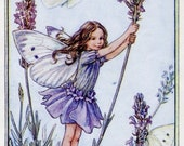 Lavender Flower Fairy Vintage Print, c.1950 Cicely Mary Barker Book Plate Illustration