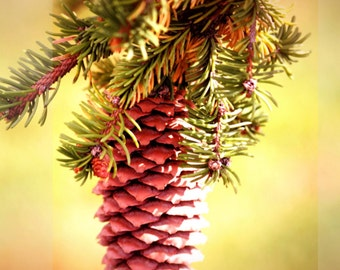 New!! Pine Cone, Greeting Card Download, Pine Cone, Pine, Tree, Nature, Seasonal, Generic Design, Photograph,, Invite KH99