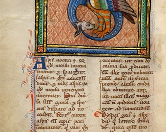 "Bestiary Illumination : ""A Dragon-like Snake"" (c1270) - Giclee Fine Art Print"