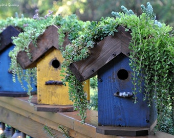 DIY Living Roof Birdhouse, Succulent Birdhouse, Green Roof, Birdhouse Planter, Wooden Birdhouse, Painted Birdhouse, Outdoor Birdhouse